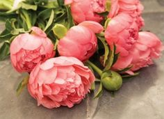 coral pink peonies