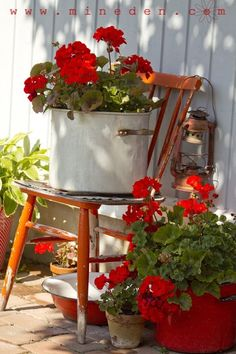 Red geraniums in an old pot on a chippy red chair. The Little Corner by saundra
