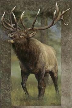 Elk...Val Warner
