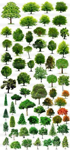 Tree photoshop W Landscape Drawings, Landscape Design, Garden Design, Tree Photoshop, Architecture Graphics, Drawing Architecture, Architecture Plan, Watercolor Trees, Watercolor Artists