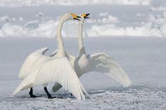 Photo Dance Of Joy by Harry  Eggens on 500px