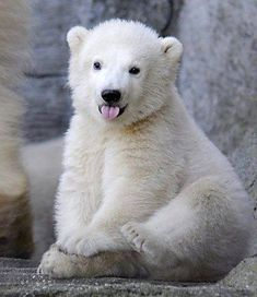Polar bear cub.                                                                                                                                                                                 Mais