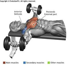 """DUMBBELL FLYES - The exercise is fit for the definition of the chest, it involves the lower part of the muscle giving the classic """"round"""" form. Fitness Workouts, At Home Workouts, Fitness Motivation, Muscle Fitness, Mens Fitness, Health Fitness, Academia Fitness, Muscle Anatomy, Chest Workouts"""