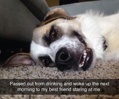 waking-up-next-to-your-dog