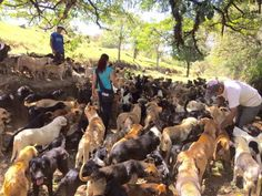 Check Out the Town in Costa Rica Where 900 Dogs Roam Free