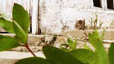 My Litle cat! Cute!