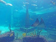 The Dig at Atlantis Resort