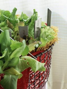 Simple Salad-Garden Containers ~ Grow a whole salad in one tight spot. This big red basket holds a plethora of spring greens -- and looks great to boot. It's a perfect place for a healthy, tasty treat.  Tip: Add interest by mix varieties for different leaf colors and textures.