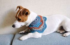 Amailo Dog Accessories - These adorable doggie accessories are charming to the max. The Amailo dog accessories allow your furry friend to be fashionable and warm at the sam. Perros Jack Russell, Jack Russell Dogs, Jack Russell Terrier, Jack Russells, Crochet Dog Sweater, Dog Crochet, Dog Milk, Yorky, Dog Collar Tags