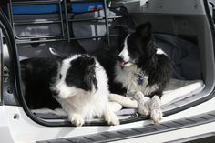 Mies and Pua ready to go home after Craw-fishing at Strawberry Reservoir. August 2015