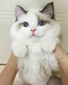 Cutest Cat Ever In HistoryMore Cute Cats