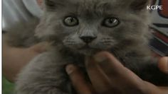 Watch: 'Lucky' kitten's rescue by firefighters caught on helmet-cam   MNN - Mother Nature Network