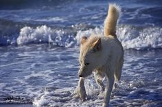 Minnie at Long Beach! Check out WagAvenue for my pet photography portfolio!