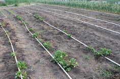 PVC Drip Irrigation System for your garden – Our Stoney Acres – PVC Drip Irriga… - Modern Drip Irrigation System, Drip System, Garden Watering System, Florida Gardening, Hydroponic Gardening, Organic Gardening, Vegetable Gardening, Veg Garden, Square Foot Gardening