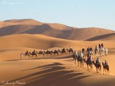 Into the land of Moroccan