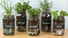 Make an adorable herb garden with old glass jars - # . Make an adorable herb garden with old glass jars - # adorable # Glass vessels