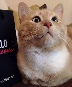 Estes gatos estrábicos são a coisa mais fofa que você vai ver hoje