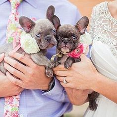 These pals who are already eyeing the bridal bouquet | 21 Impossibly Adorable Wedding Day Dogs