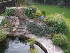 long grasses for ponds - Google Search