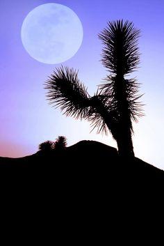 Joshua Tree National Park California via flickr