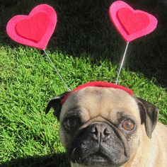 Valentines day HEART HAT for pets
