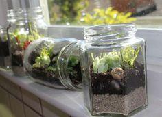 Jam jar terrariums