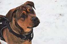 Parhaat koiran valjaat vuonna 2020 Dogs, Animals, Animales, Animaux, Pet Dogs, Doggies, Animal, Animais