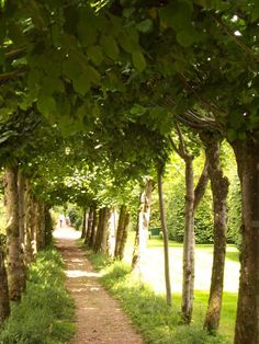 The Lime Walk, Athelhampton House - What a cozy spring stroll?