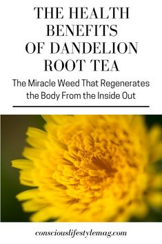 The health benefits of dandelion root tea and the fresh leafy greens of the plant are extraordinary—it literally regenerates your body from the inside out. Dandelion Tea Benefits, Dandelion Root Tea, Dandelion Jelly, Herbs For Health, Health Tips, Turmeric Tea, Alternative Health, Alternative Medicine, Medicinal Plants