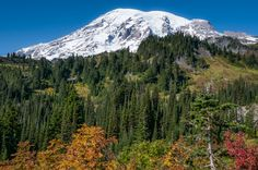 View of Mount Rainier in the Fall, lower Pardise, Mount Rainier National Park.  Beautiful.