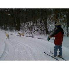 Innkeeper Donna Justin skijoring with Heidi & George Siberian Huskies @ Justin Trails Resort near Sparta WI www.justintrails.com ...just passed the playhouse, now rounding the corner & following the groomed trail next to the woodline