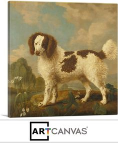 Brown and White Norfolk or Water Spaniel, 1778 Stubbs George Painting Reproductions