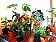 Uuden kasvin kanssa kotiin, miten pitää toimia? Plants, Flora, Plant, Planting