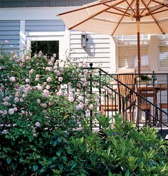 "New Home Interior Design: Fresh Ideas for Outdoor Rooms - Choose a climbing rose like ""The Fairy"" for porch railings. Avoid rampant growers that can overwhelm or damage metal and woodwork"