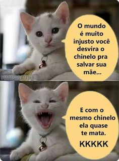 Super Ideas For Humor Memes Ecards Funny Cats, Funny Jokes, Hilarious, Fun Funny, Funny Stuff, Gato Do Face, Good Humor, Try Not To Laugh, Tumblr Funny