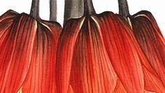 IŞIK GÜNER  Botanical Art