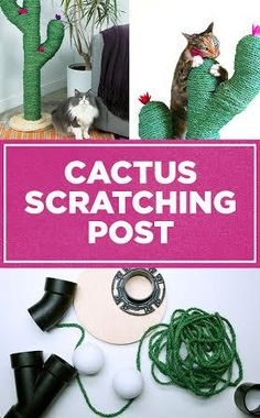 DIY cactus scratching post