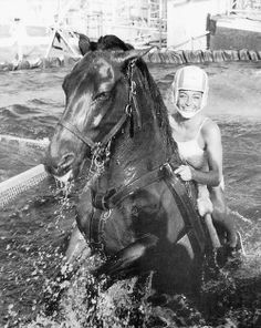 History and pictures of steel pier diving horses. The high diving horse act ran from the until the late when animal rights activists had the show shut down. All The Pretty Horses, Beautiful Horses, Zebras, Horse Diving, Old Pictures, Old Photos, Funny Animals, Cute Animals, Majestic Horse