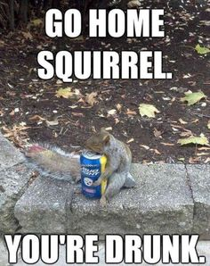 When squirrels get hot, and if they find something cold they will wrap themselves around it. XD