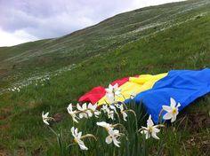 Visit the Daffodil Natural Botanical Reservation in Bistrita Nasaud County.
