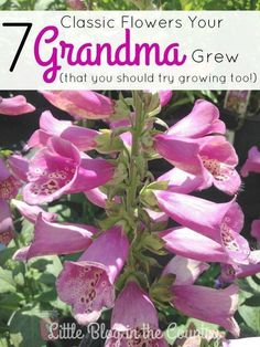 7 Flowers Your Grandma Grew are just what you need to update your garden this year! | Flower Gardening | Garden Tips | What To Plant In Your Garden | Flower Garden Plants