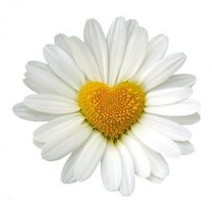 Hearts and daisy....2 of my favorite things.