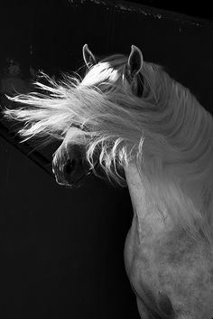 Can horses go to heaven? I hope so God. All The Pretty Horses, Beautiful Horses, Animals Beautiful, Zebras, Andalusian Horse, Friesian Horse, Arabian Horses, All About Horses, Majestic Horse