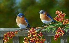 Bird Image, Bird wallpaper, Bird Photo, Beautiful pic     #Birdimage #BeautyfullBird #Bird #Photo Beautiful Birds, Animals Beautiful, Pretty Birds, Animals And Pets, Cute Animals, Bird Wallpaper, Wallpaper Desktop, Holiday Places, Weekend Fun