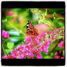 Photos August 23, 2012 at 06:24AM via Instagram © Nicolas Liu