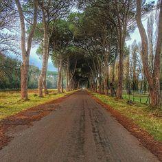 Allora bimbi se nel weekend non sapete cosa fare godetevi una bella passeggiata nel Parco di San Rossore! Intanto facciamo i complimenti a @claudio_indiani che con questo scatto si aggiudica il BEST OF THE DAY OF #igerspisa!  #botdpisa by igerspisa