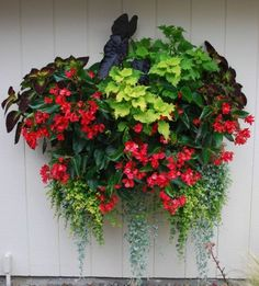 Shade wall container garden... by selena