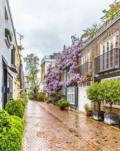 A mews in Kensington with a London wisteria house. This guide to where to see wisteria in London will show you all the best London wisteria. London House, London Life, London Blog, London Style, Places To Travel, Places To See, Mews House, London Apartment, Apartments In London