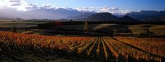 Experience New Zealand Wine Country At Wharekauhau.