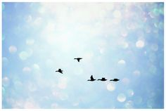 the flight by ~sleepingwithgiants on deviantART